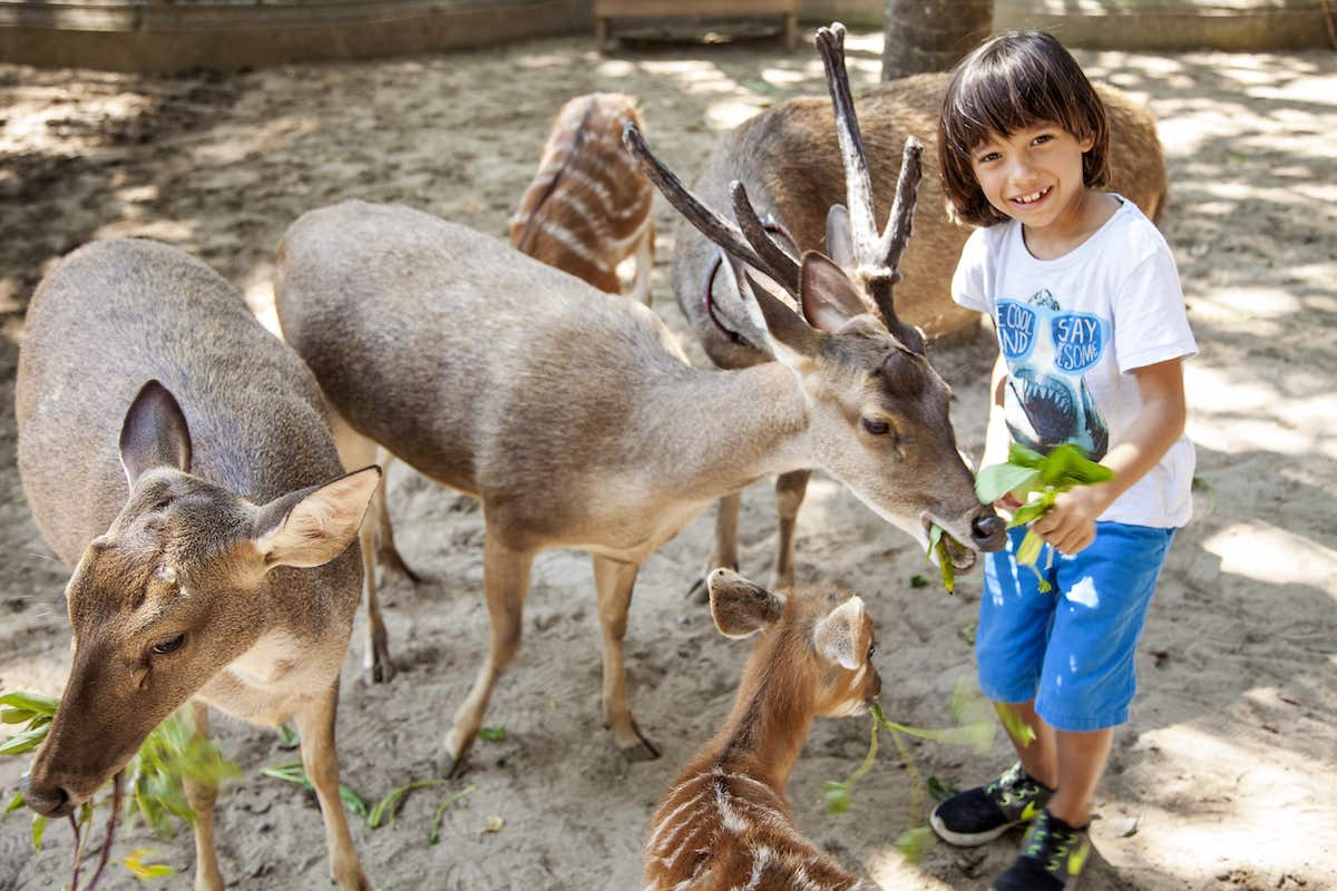 Deer Park at Bali Zoo
