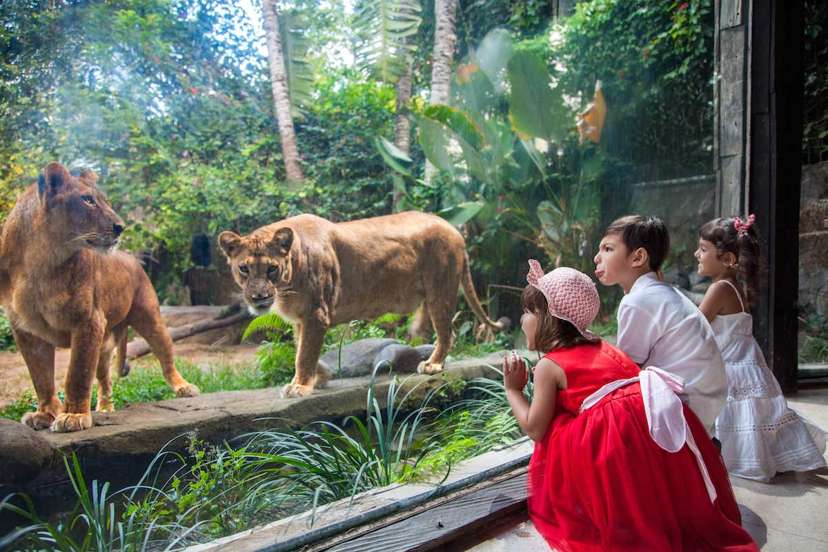 Zoo Explorer - Buy your Bali Zoo tickets
