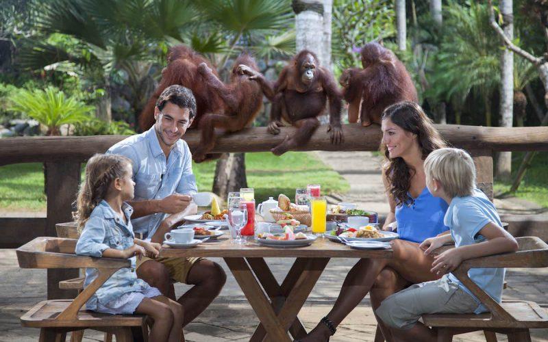 Breakfast with the Orang Utans at Bali Zoo