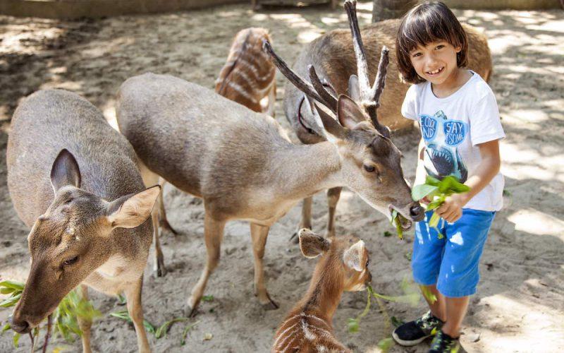 Deer Park at Bali Zoo