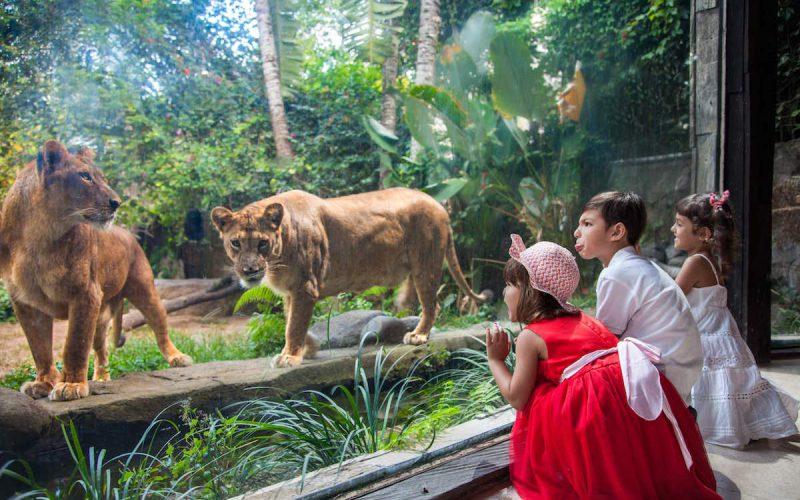 Zoo Explorer - Buy your Bali Zoo tickets