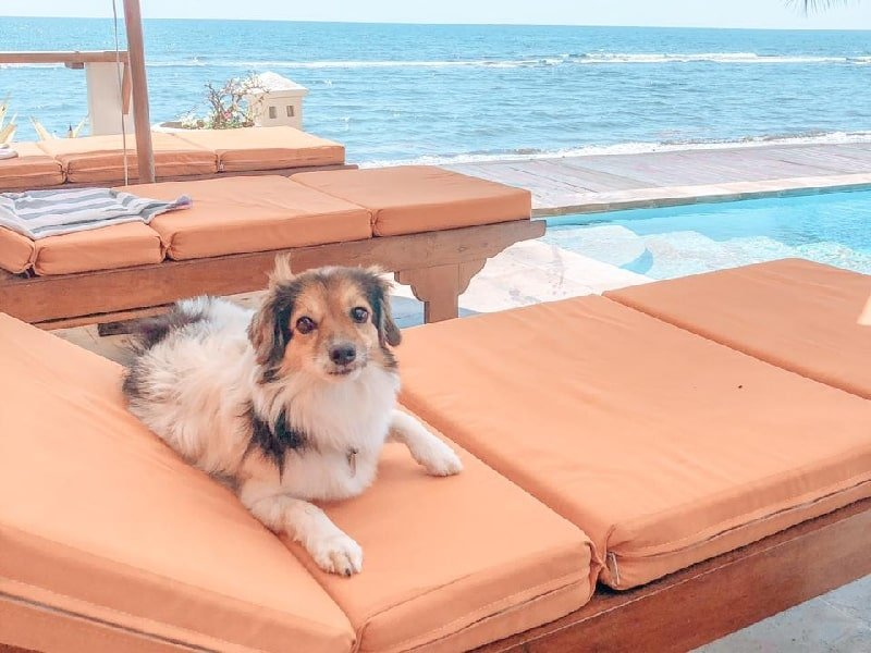 A dog relaxing by the beach