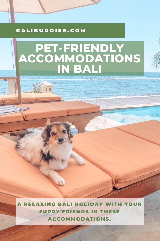 Bali Pet Friendly Accommodations Pin 2