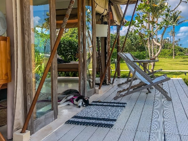 Bring your dog to Bali Beach Glamping