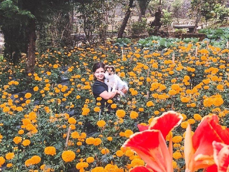 Flower fields at Munduk Farm House