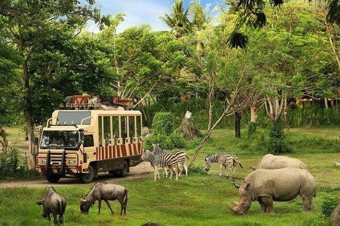 A safari journey for kids in Bali
