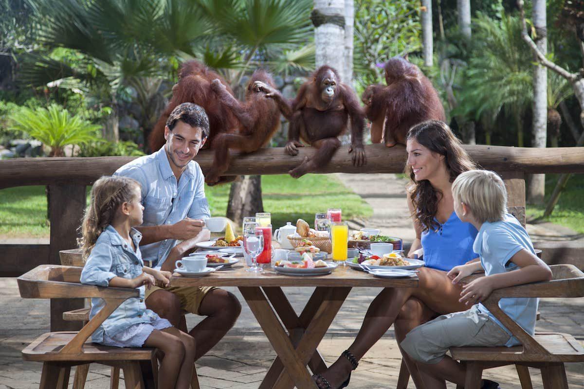 Breakfast-with-the-Orang-Utans-at-Bali-Zoo